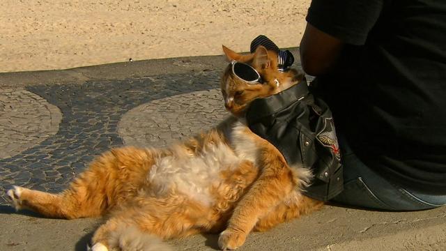 The Copacabana Bikie Cat