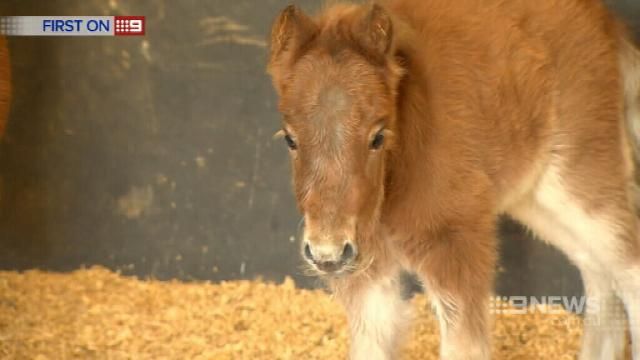 Gold Coast horse saved with CPR