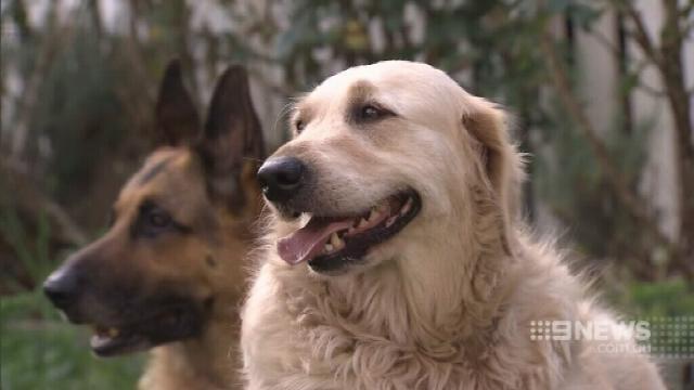 Brisbane dog saved from death row
