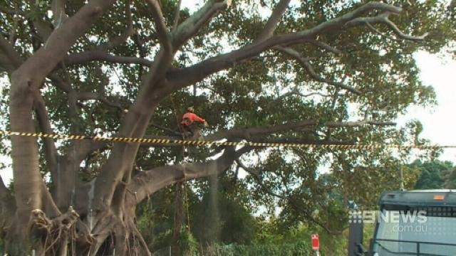 VIDEO: More trees to get the chop for Sydney light rail