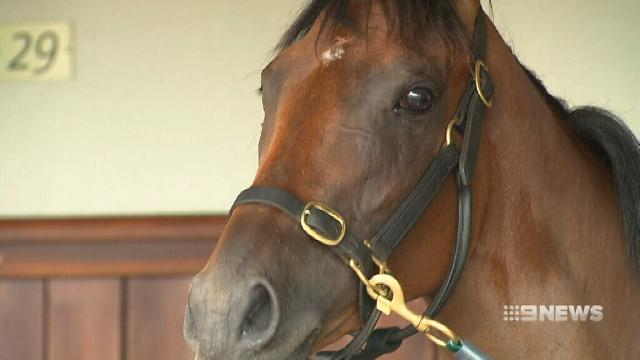Black Caviar's foal comes third
