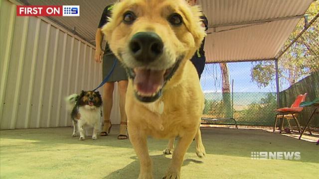 Adelaide dog owners warned over parvo