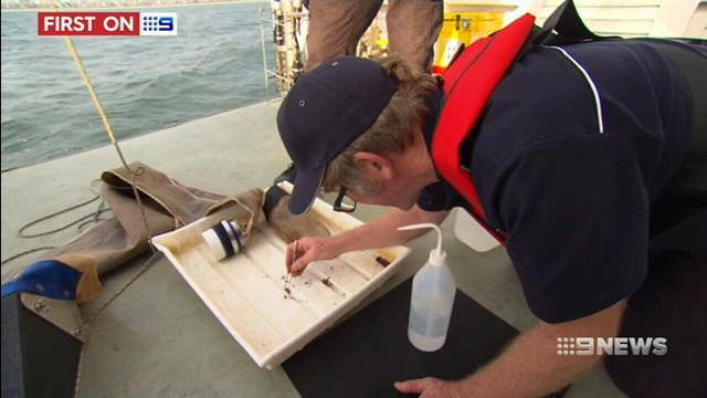 VIDEO: New laws and millions of dollars in Victoria's environmental protection overhaul