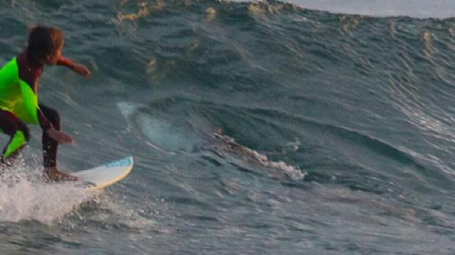 Ten-year-old boy surfs over great white shark in NSW