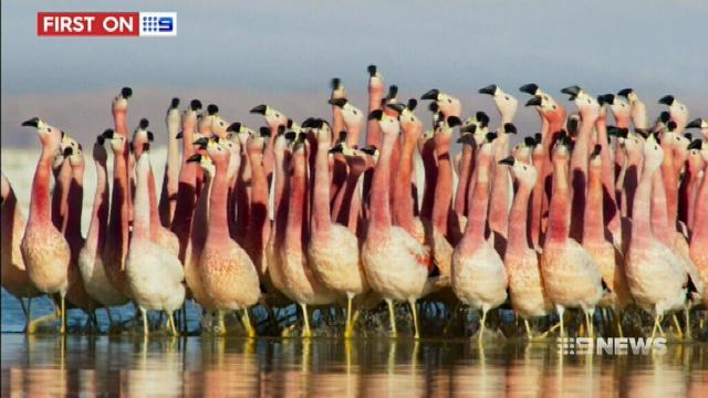 VIDEO: Queensland man behind the lens of David Attenborough's 'Planet Earth'
