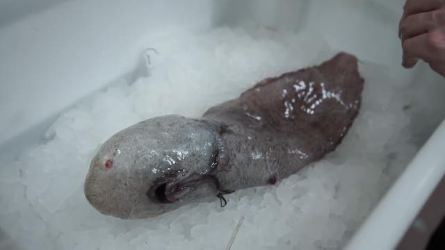 Australian scientists find faceless fish in unexplored abyss