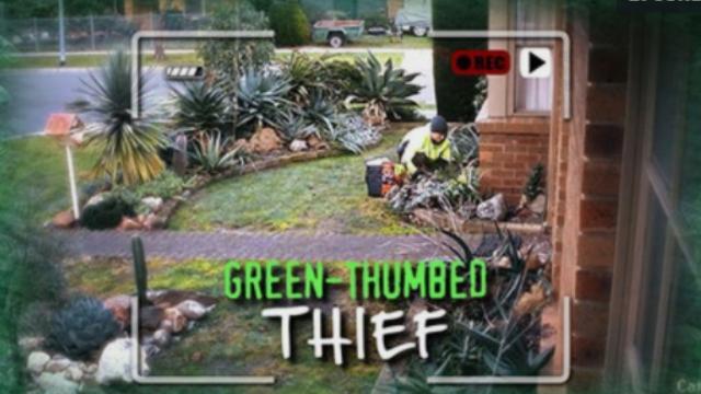 Save Our Succulents: Melbourne gardens fall victim to 'plant black market'