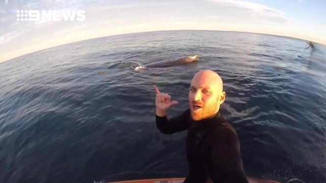 Paddle boarder's close encounter with 'super friendly' whale