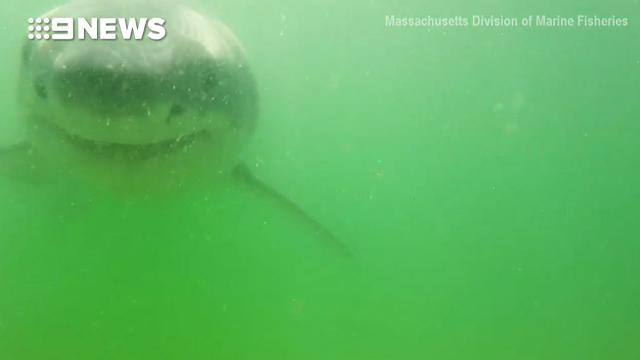 Great white shark chomps down on researcher's camera