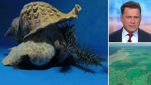 Giant sea snails could solve Great Barrier Reef problem