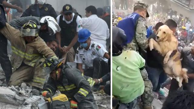 Dog pulled from rubble as Mexico searches for survivors